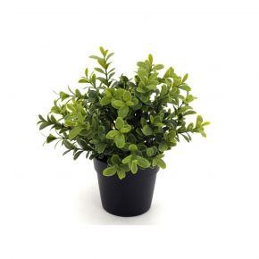 PLANT MURRAYA BONSAI GREEN 24CM