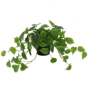 PLANT RAMBIC LEAF SMALL 57X29CM